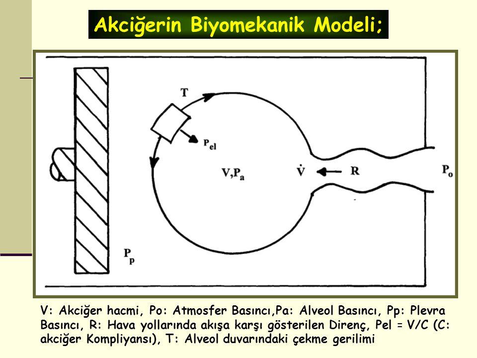 Akciğerin Biyomekanik Modeli;