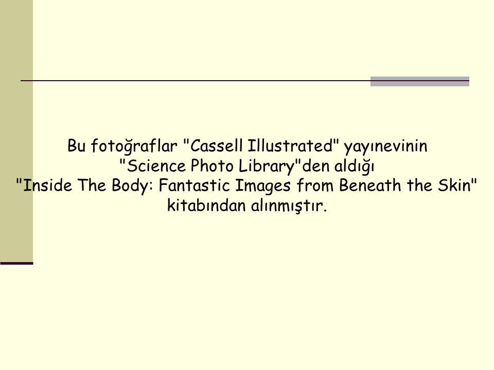 Bu fotoğraflar Cassell Illustrated yayınevinin