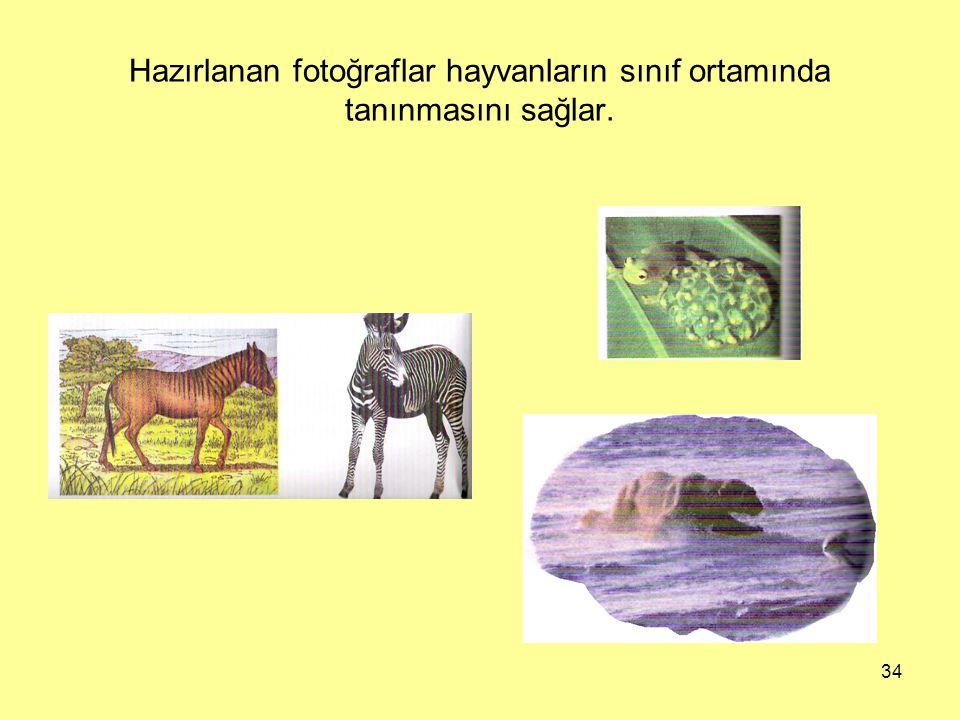 Hazırlanan fotoğraflar hayvanların sınıf ortamında tanınmasını sağlar.