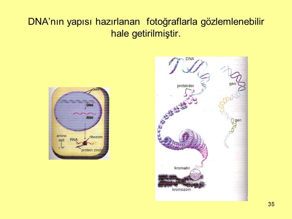 DNA'nın yapısı hazırlanan fotoğraflarla gözlemlenebilir hale getirilmiştir.