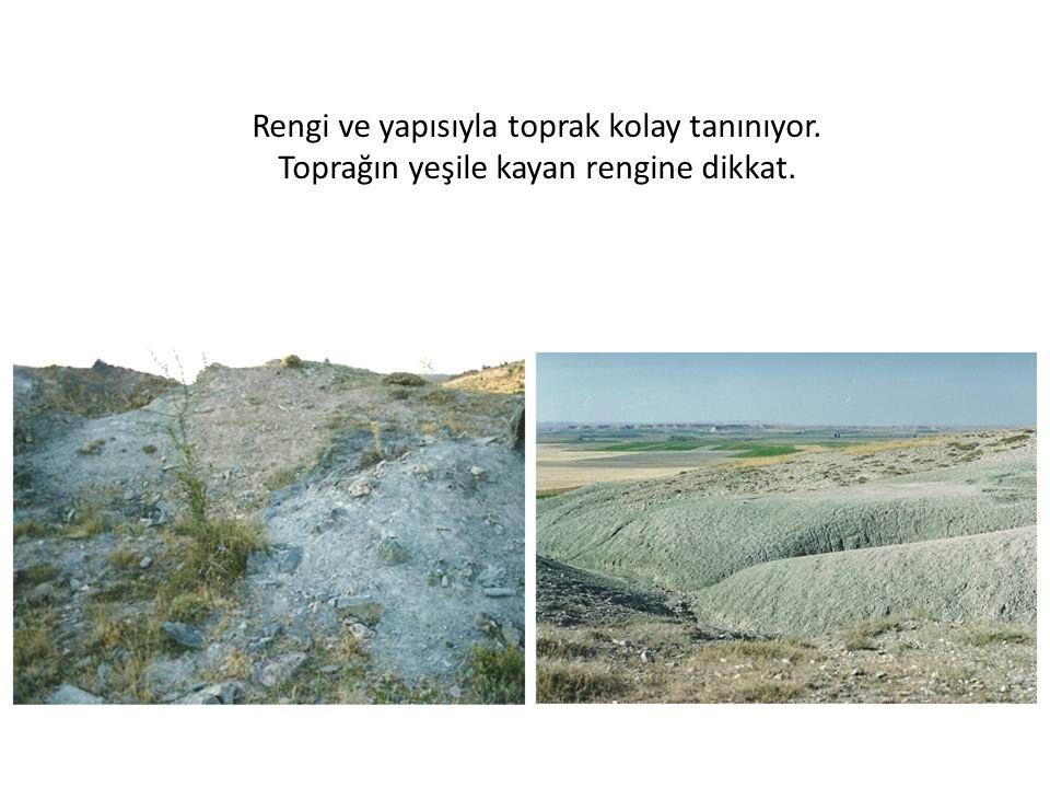 Rengi ve yapısıyla toprak kolay tanınıyor.