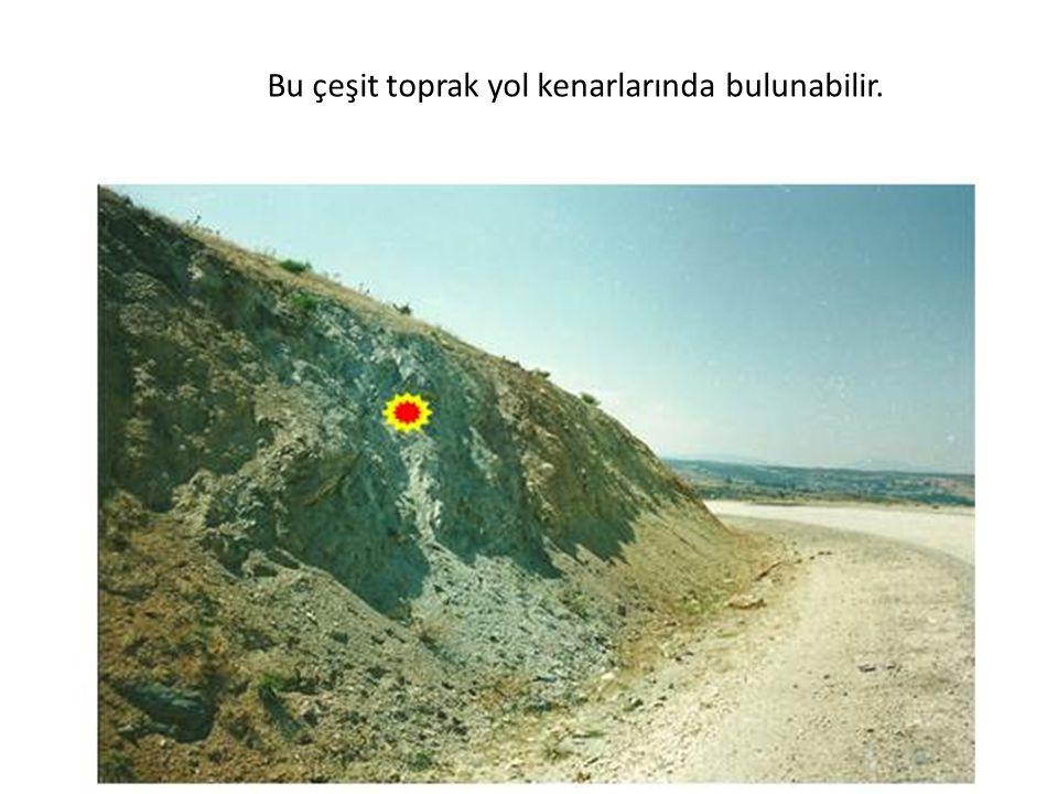 Bu çeşit toprak yol kenarlarında bulunabilir.