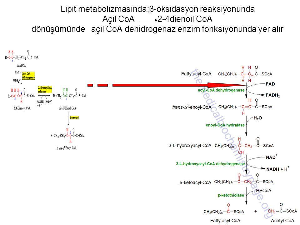 Lipit metabolizmasında;β-oksidasyon reaksiyonunda Açil CoA 2-4dienoil CoA dönüşümünde açil CoA dehidrogenaz enzim fonksiyonunda yer alır