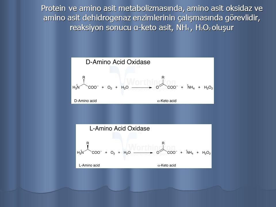 Protein ve amino asit metabolizmasında, amino asit oksidaz ve amino asit dehidrogenaz enzimlerinin çalışmasında görevlidir, reaksiyon sonucu α-keto asit, NH4 , H2O2 oluşur