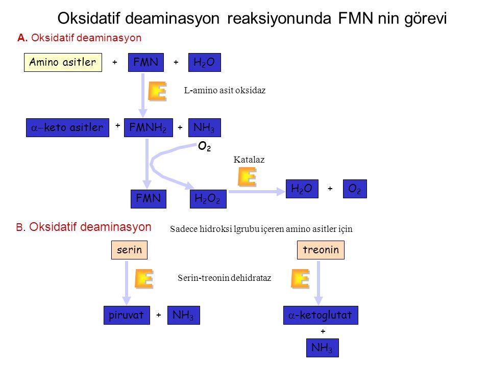 E Oksidatif deaminasyon reaksiyonunda FMN nin görevi Amino asitler FMN