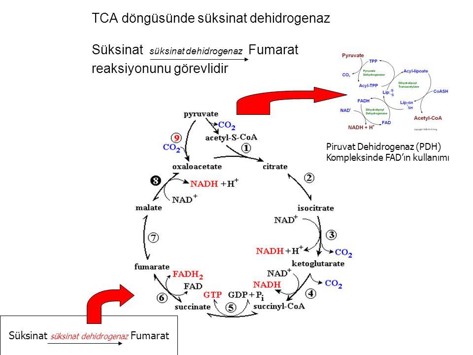 TCA döngüsünde süksinat dehidrogenaz Süksinat süksinat dehidrogenaz Fumarat reaksiyonunu görevlidir