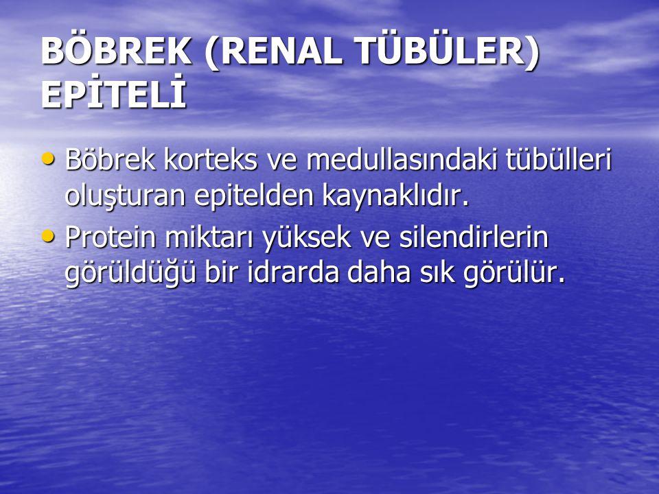BÖBREK (RENAL TÜBÜLER) EPİTELİ