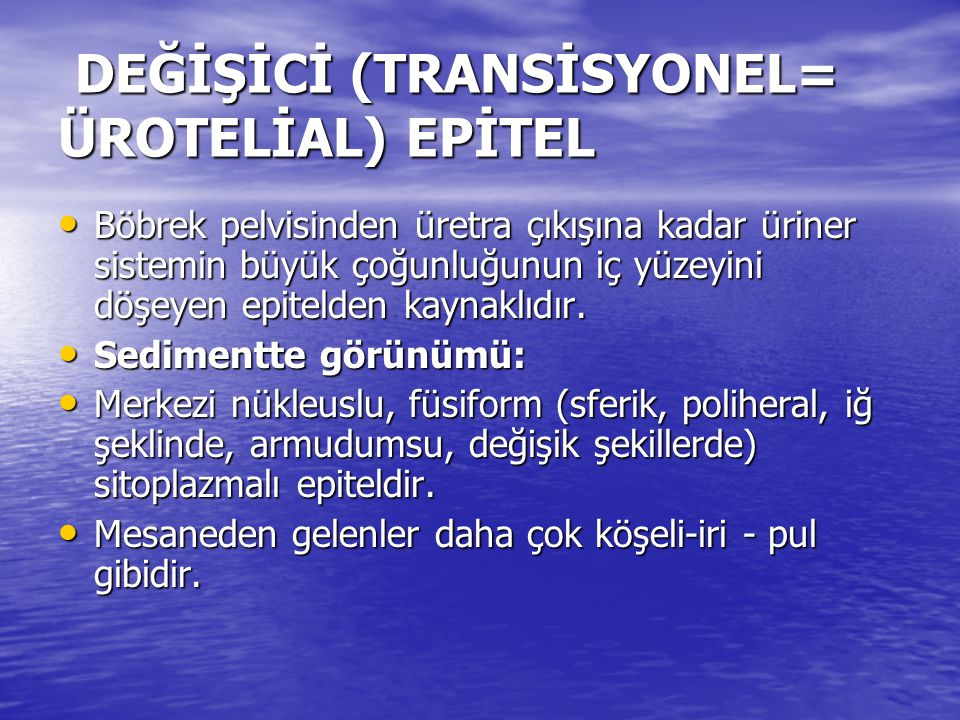 DEĞİŞİCİ (TRANSİSYONEL= ÜROTELİAL) EPİTEL