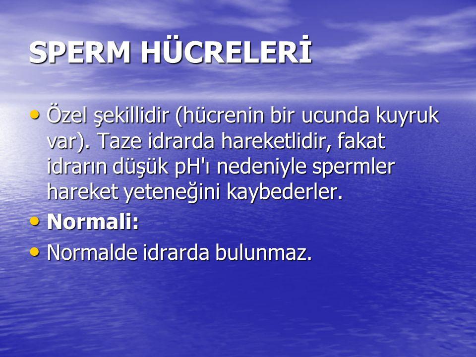 SPERM HÜCRELERİ