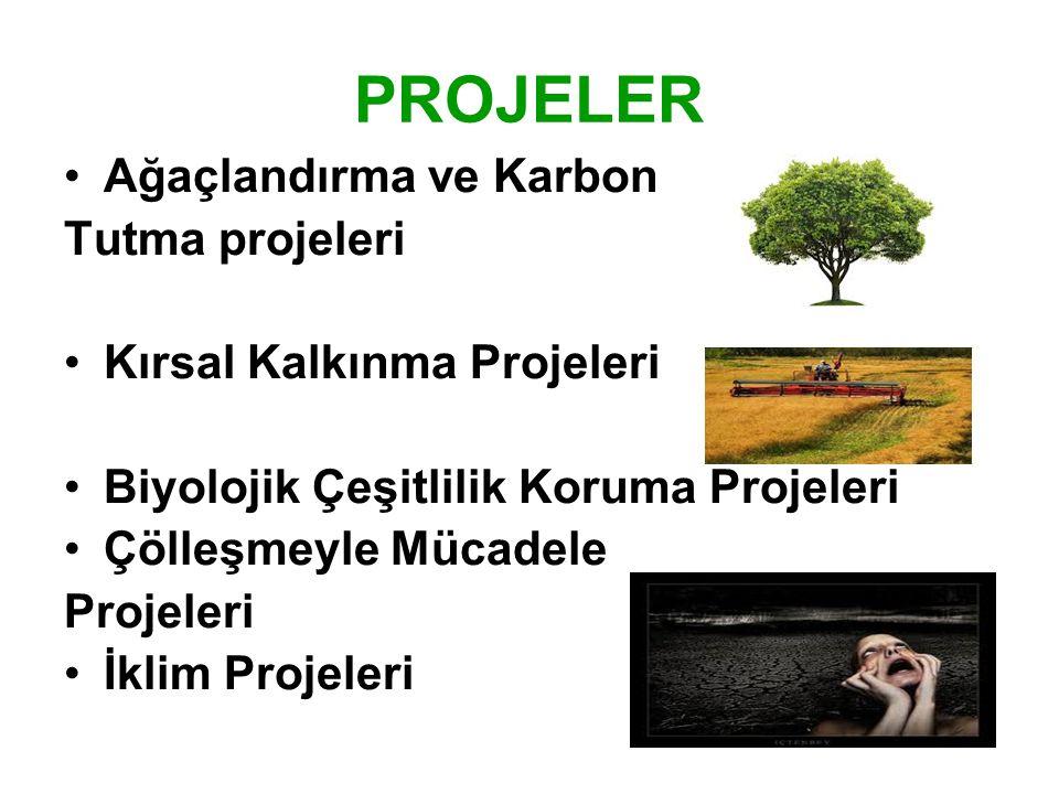 PROJELER Ağaçlandırma ve Karbon Tutma projeleri