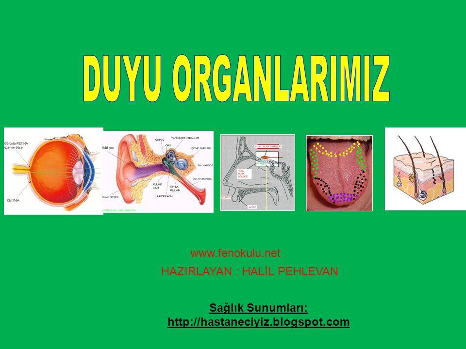 DUYU ORGANLARIMIZ www.fenokulu.net HAZIRLAYAN : HALİL PEHLEVAN