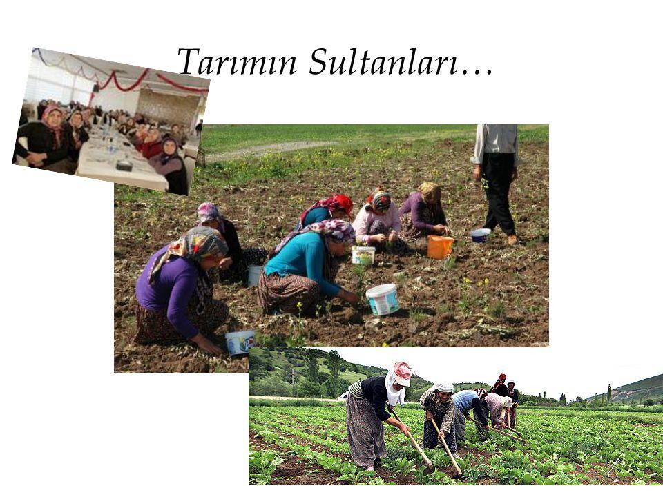 Tarımın Sultanları…