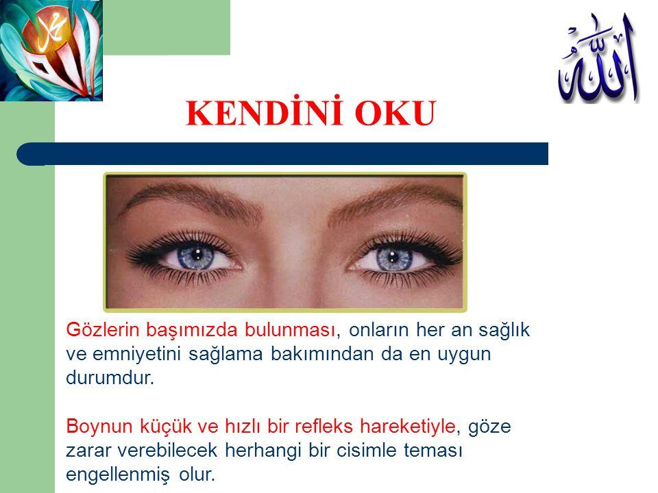 KENDİNİ OKU Gözlerin başımızda bulunması, onların her an sağlık