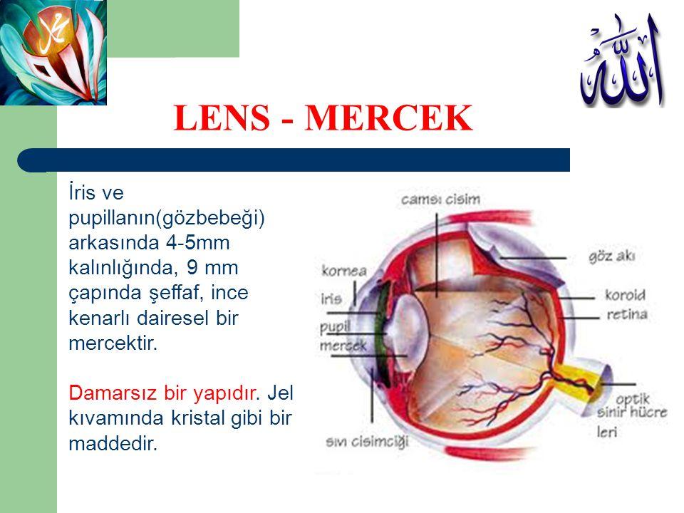 LENS - MERCEK İris ve pupillanın(gözbebeği) arkasında 4-5mm