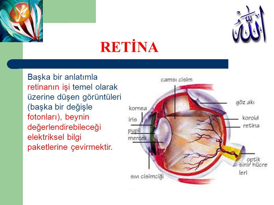 RETİNA Başka bir anlatımla retinanın işi temel olarak