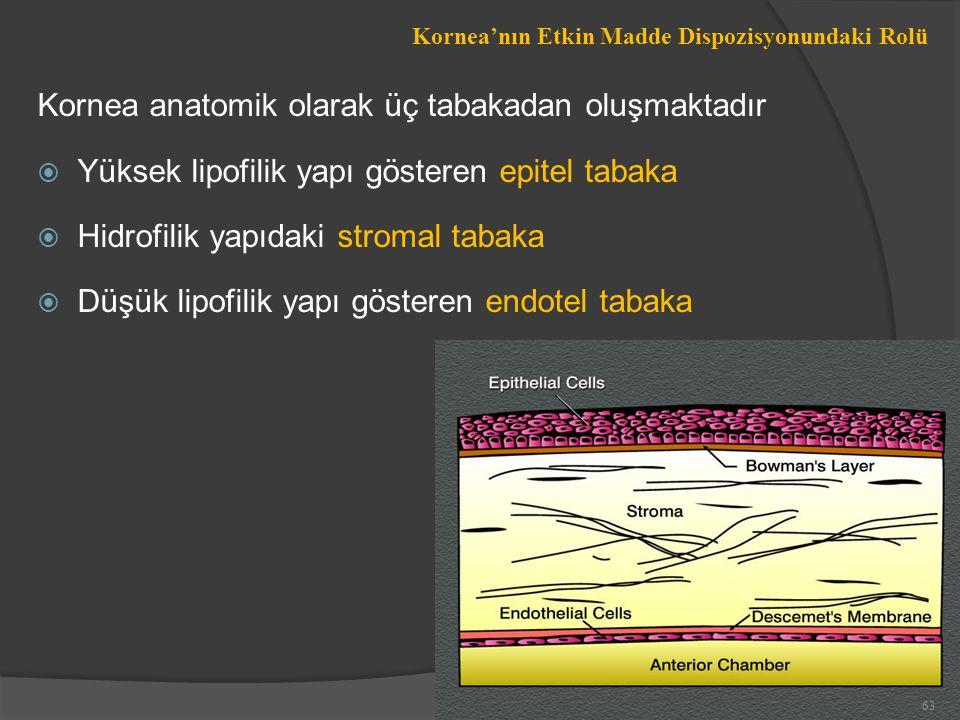 Kornea anatomik olarak üç tabakadan oluşmaktadır