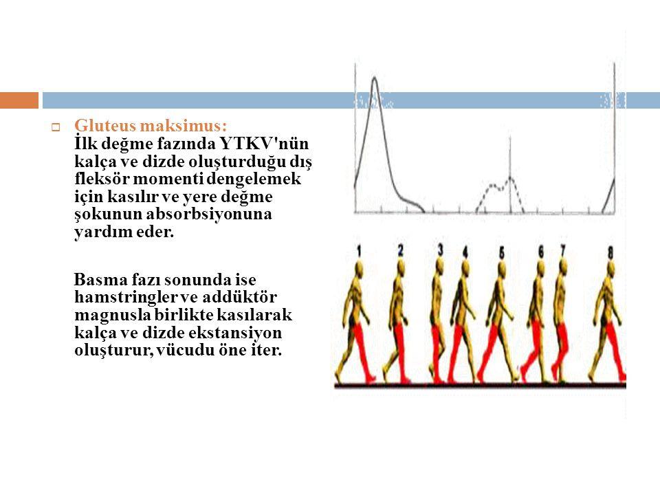 Gluteus maksimus: İlk değme fazında YTKV nün kalça ve dizde oluşturduğu dış fleksör momenti dengelemek için kasılır ve yere değme şokunun absorbsiyonuna yardım eder.