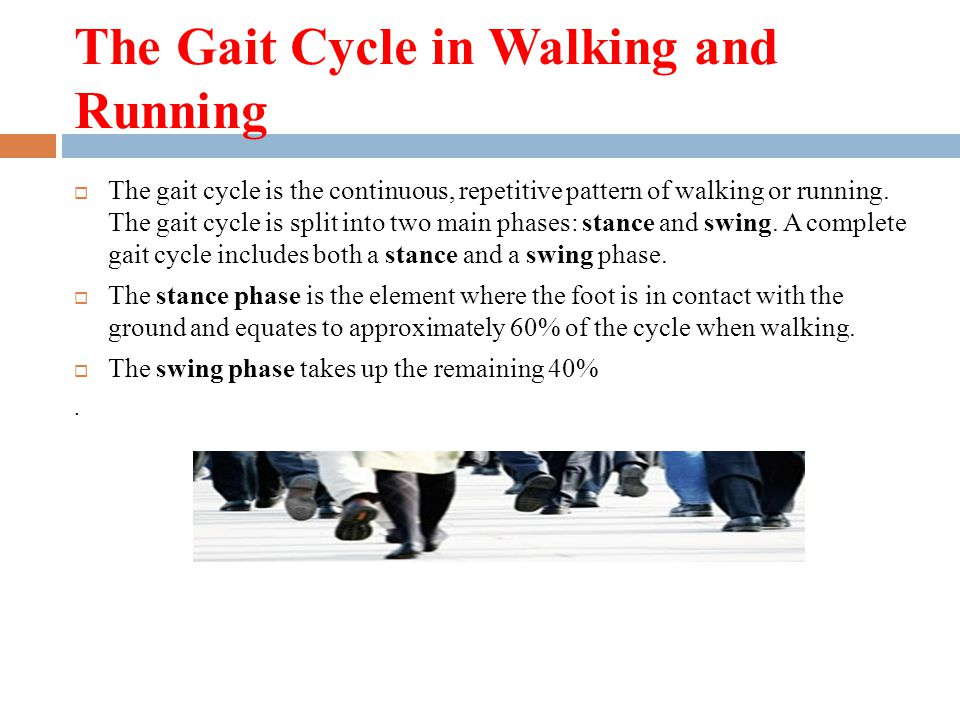 The Gait Cycle in Walking and Running