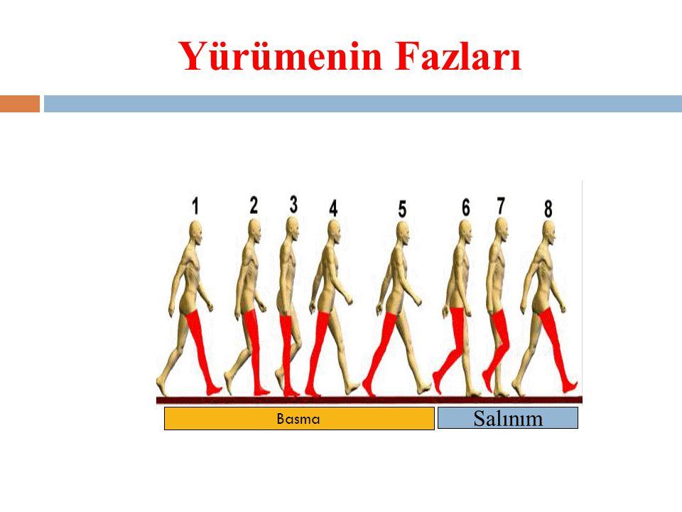 Yürümenin Fazları Basma Salınım