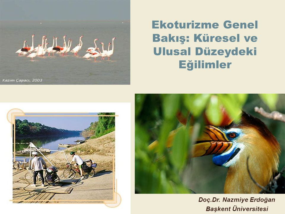 Ekoturizme Genel Bakış: Küresel ve Ulusal Düzeydeki Eğilimler