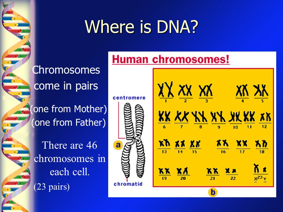 There are 46 chromosomes in each cell.