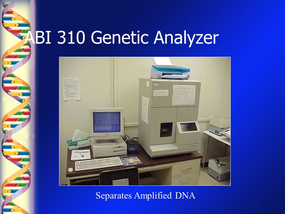 ABI 310 Genetic Analyzer Separates Amplified DNA