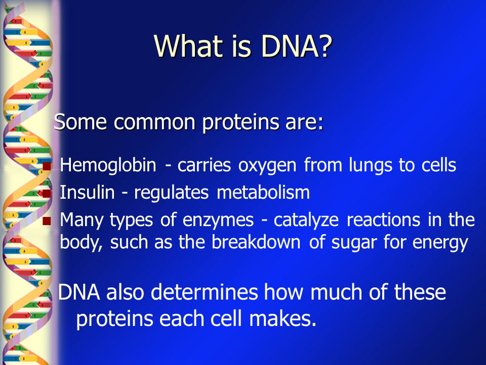 What is DNA Some common proteins are: