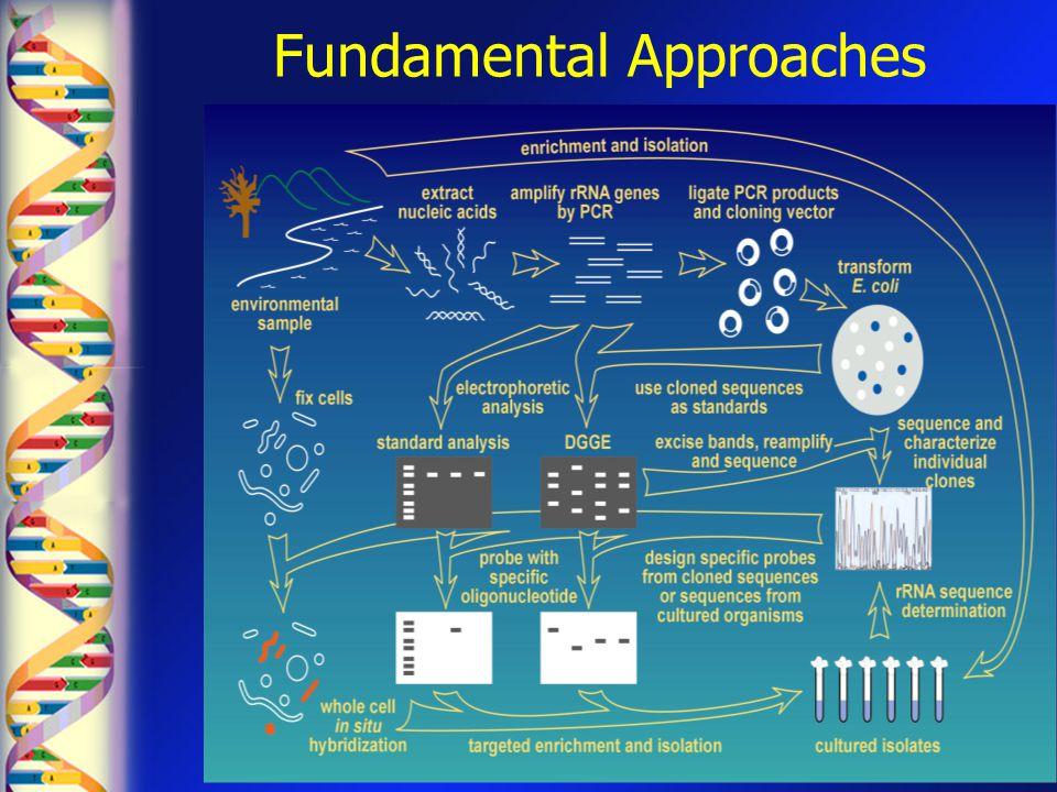Fundamental Approaches