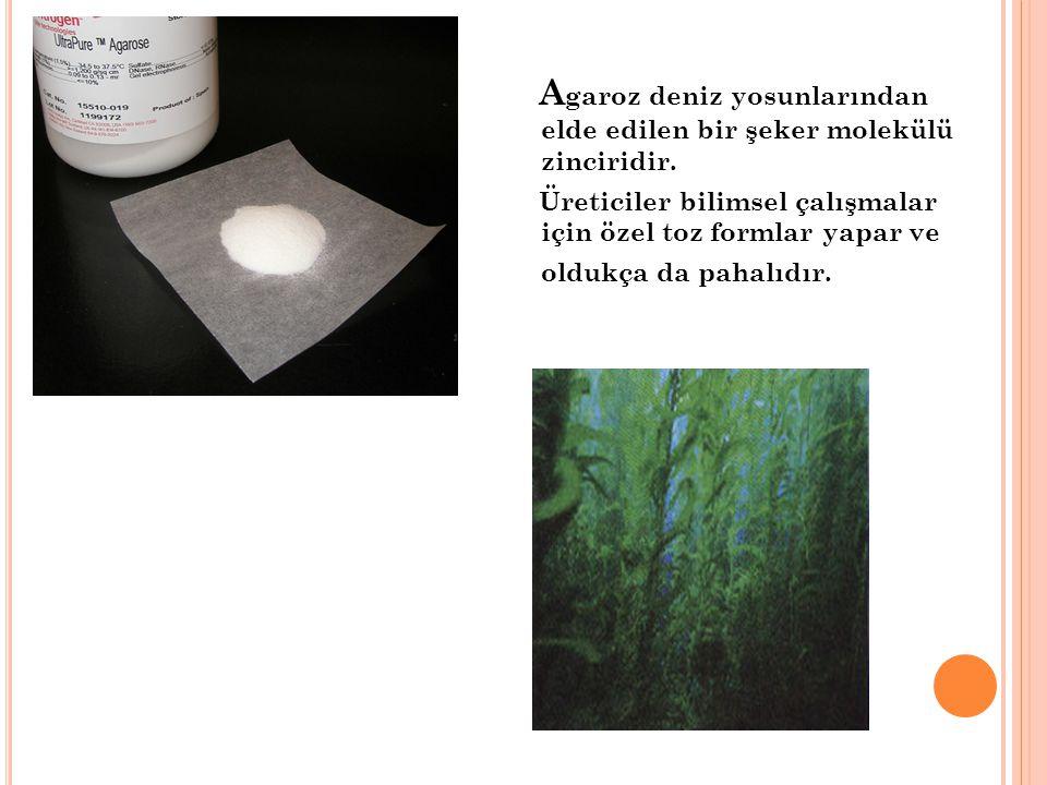 Agaroz deniz yosunlarından elde edilen bir şeker molekülü zinciridir.