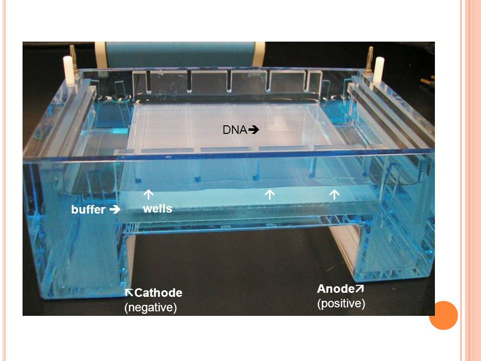 DNA  wells   buffer  Anode (positive) Cathode (negative)