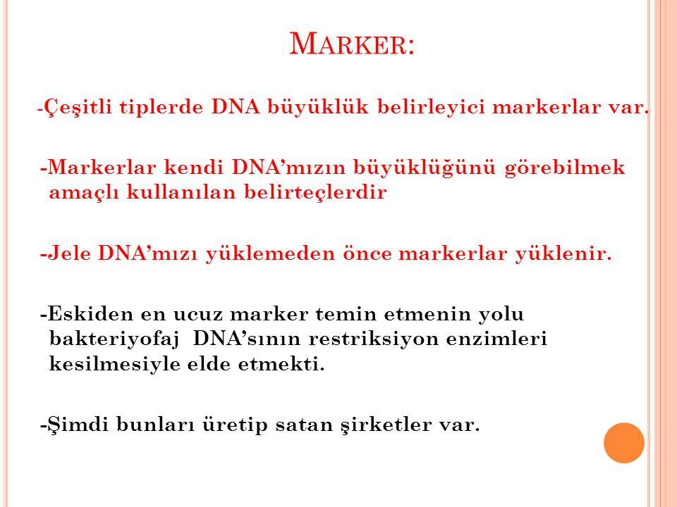 Marker: -Çeşitli tiplerde DNA büyüklük belirleyici markerlar var.