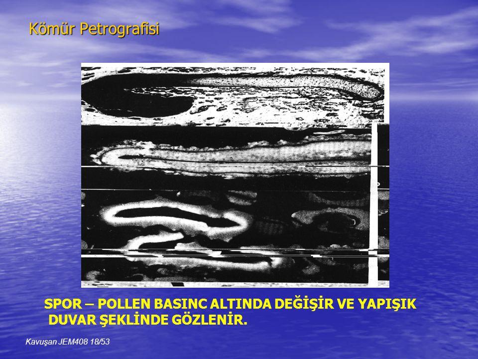 Kömür Petrografisi SPOR – POLLEN BASINC ALTINDA DEĞİŞİR VE YAPIŞIK