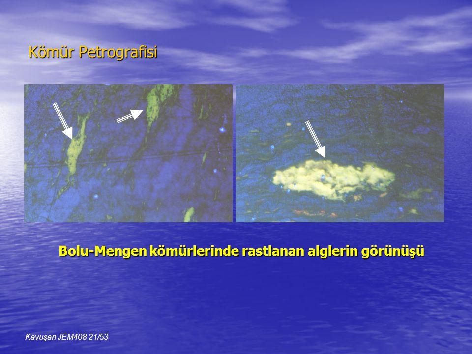 Kömür Petrografisi Bolu-Mengen kömürlerinde rastlanan alglerin görünüşü Kavuşan JEM408 21/53