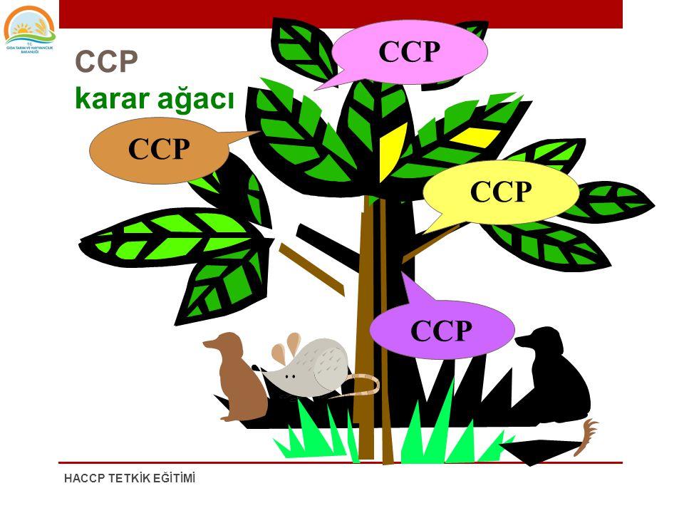 CCP CCP karar ağacı CCP CCP CCP HACCP TETKİK EĞİTİMİ