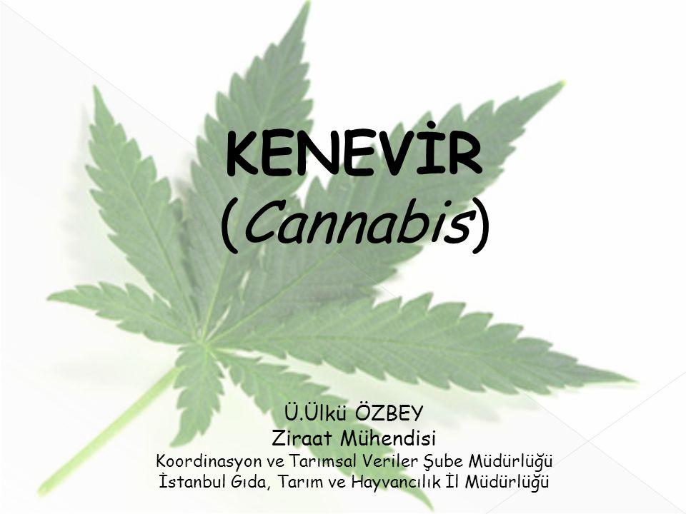 KENEVİR (Cannabis) Ü.Ülkü ÖZBEY Ziraat Mühendisi