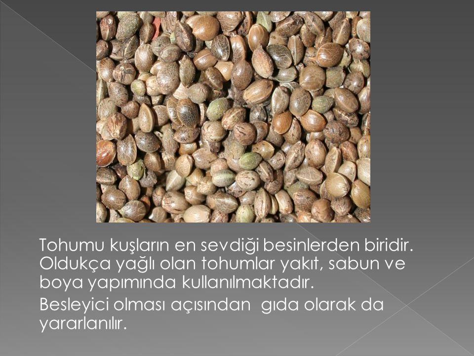Tohumu kuşların en sevdiği besinlerden biridir