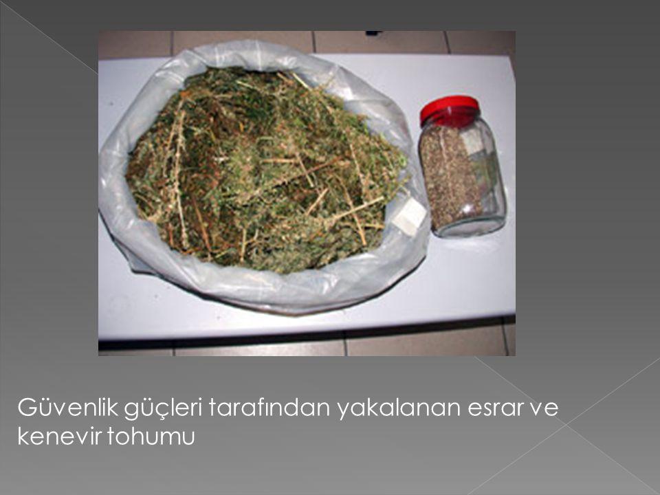 Güvenlik güçleri tarafından yakalanan esrar ve kenevir tohumu