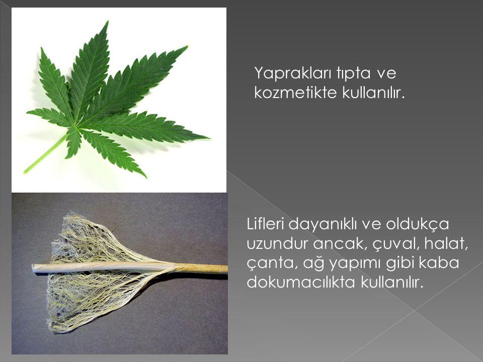 Yaprakları tıpta ve kozmetikte kullanılır.