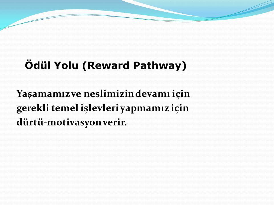 Ödül Yolu (Reward Pathway) Yaşamamız ve neslimizin devamı için gerekli temel işlevleri yapmamız için dürtü-motivasyon verir.