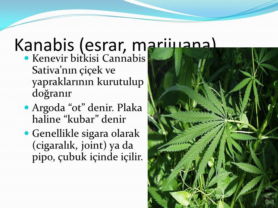 Kanabis (esrar, marijuana)