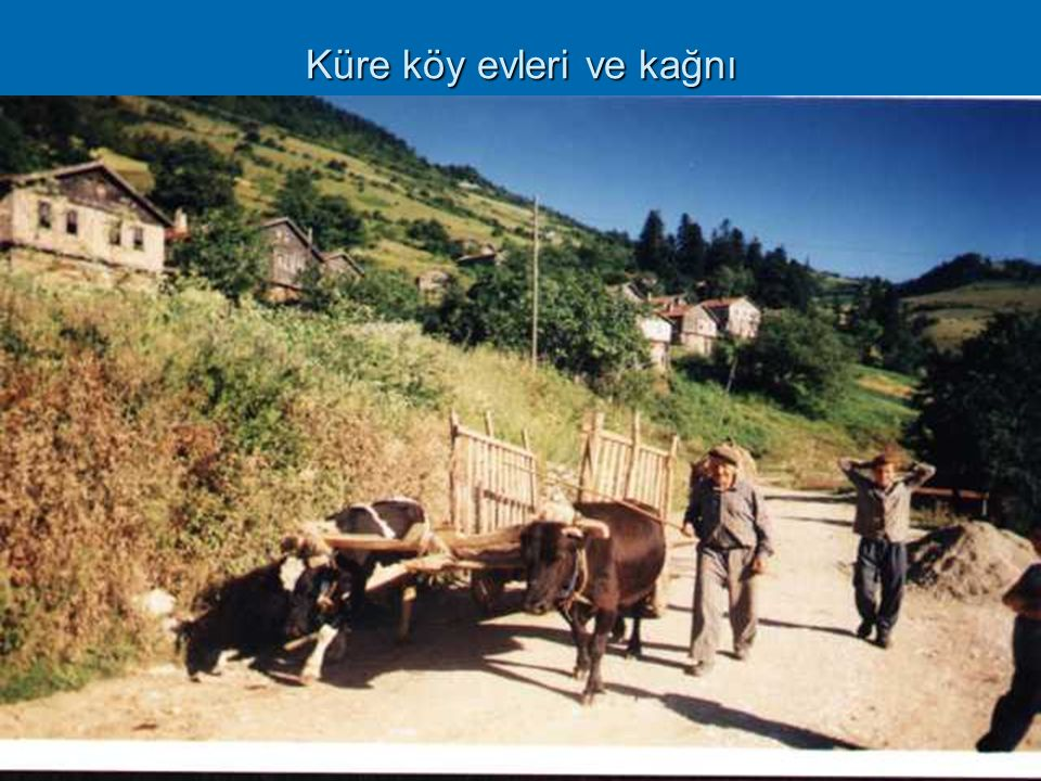 Küre köy evleri ve kağnı