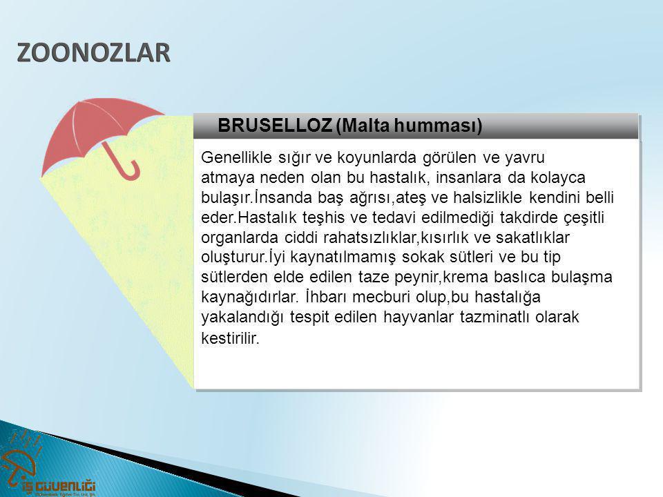 ZOONOZLAR BRUSELLOZ (Malta humması)