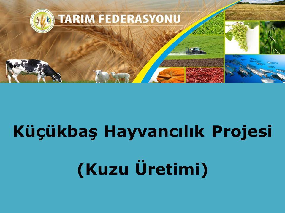 Küçükbaş Hayvancılık Projesi (Kuzu Üretimi)