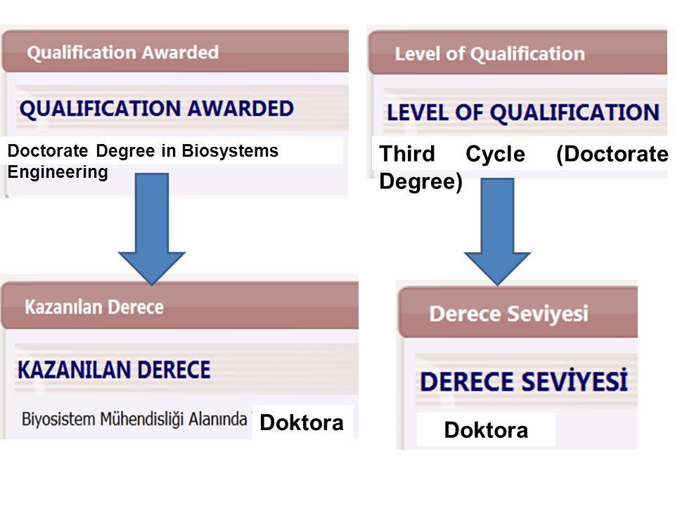 Third Cycle (Doctorate Degree)