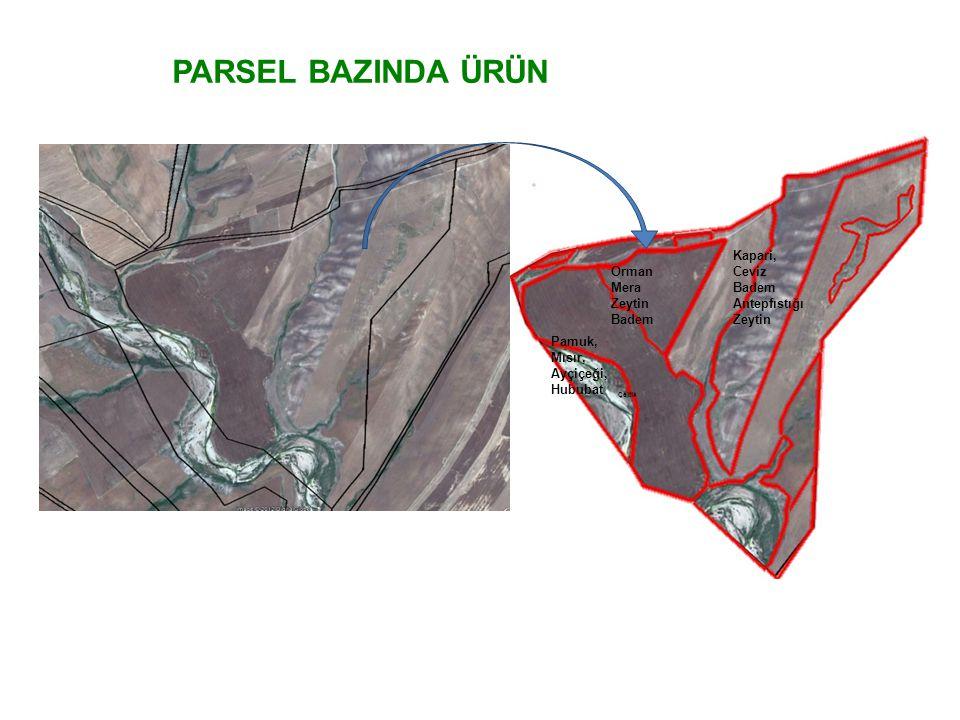 PARSEL BAZINDA ÜRÜN Kapari, Ceviz Orman Antepfıstığı Mera Zeytin Badem
