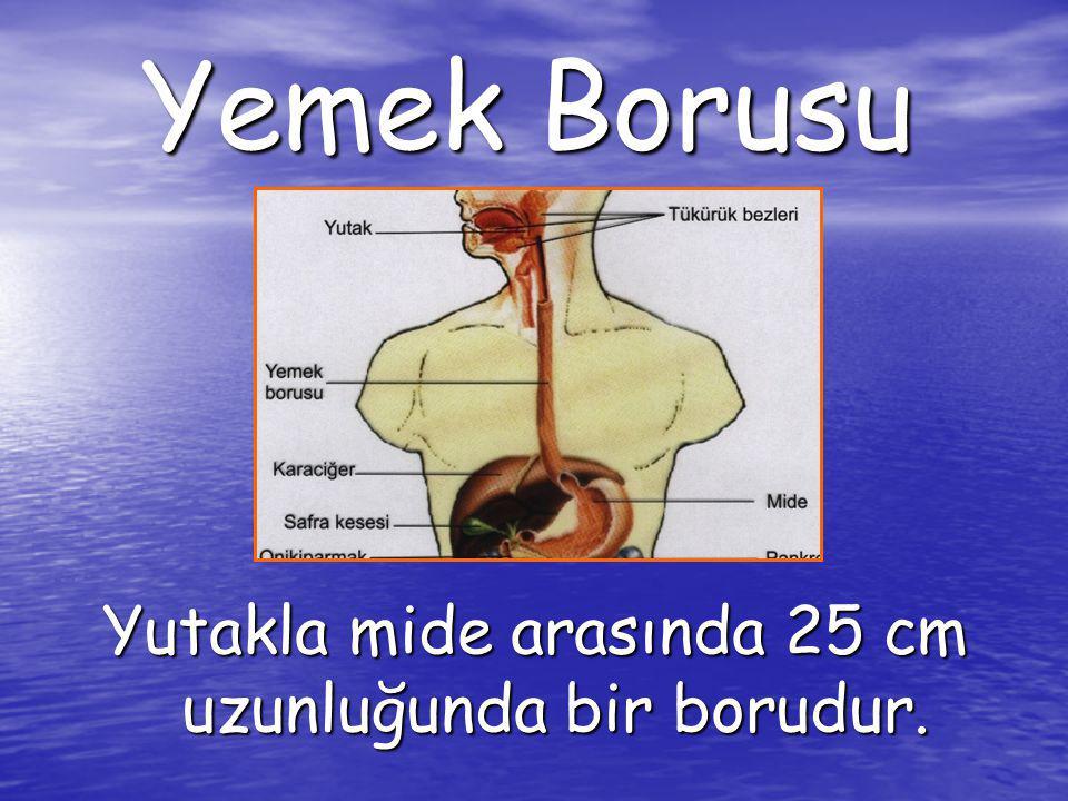 Yutakla mide arasında 25 cm uzunluğunda bir borudur.