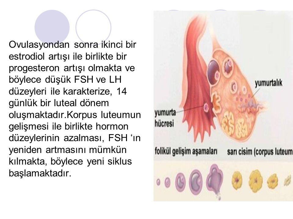 Ovulasyondan sonra ikinci bir estrodiol artışı ile birlikte bir progesteron artışı olmakta ve böylece düşük FSH ve LH düzeyleri ile karakterize, 14 günlük bir luteal dönem oluşmaktadır.Korpus luteumun gelişmesi ile birlikte hormon düzeylerinin azalması, FSH 'ın yeniden artmasını mümkün kılmakta, böylece yeni siklus başlamaktadır.