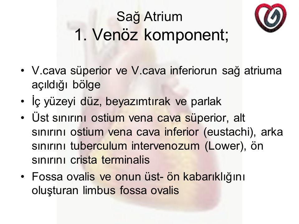 Sağ Atrium 1. Venöz komponent;