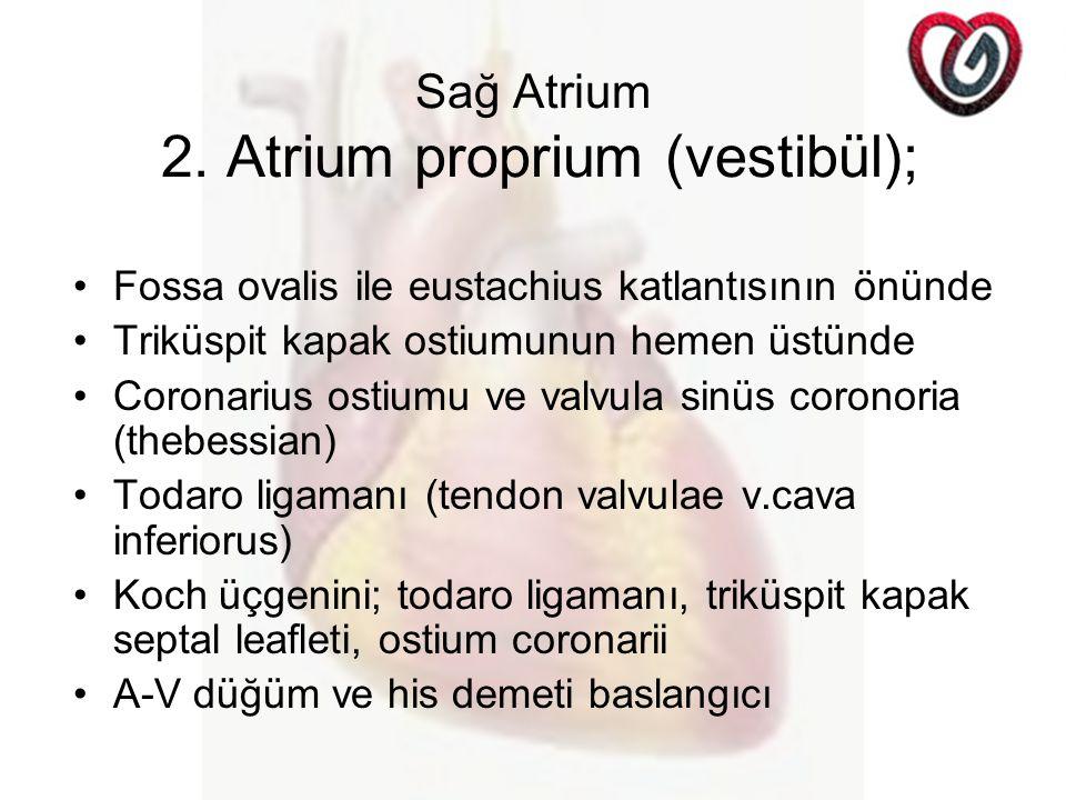 Sağ Atrium 2. Atrium proprium (vestibül);