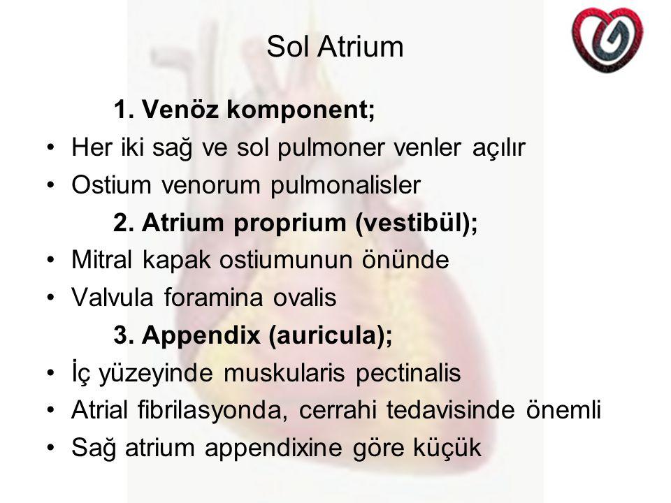 Sol Atrium 1. Venöz komponent;